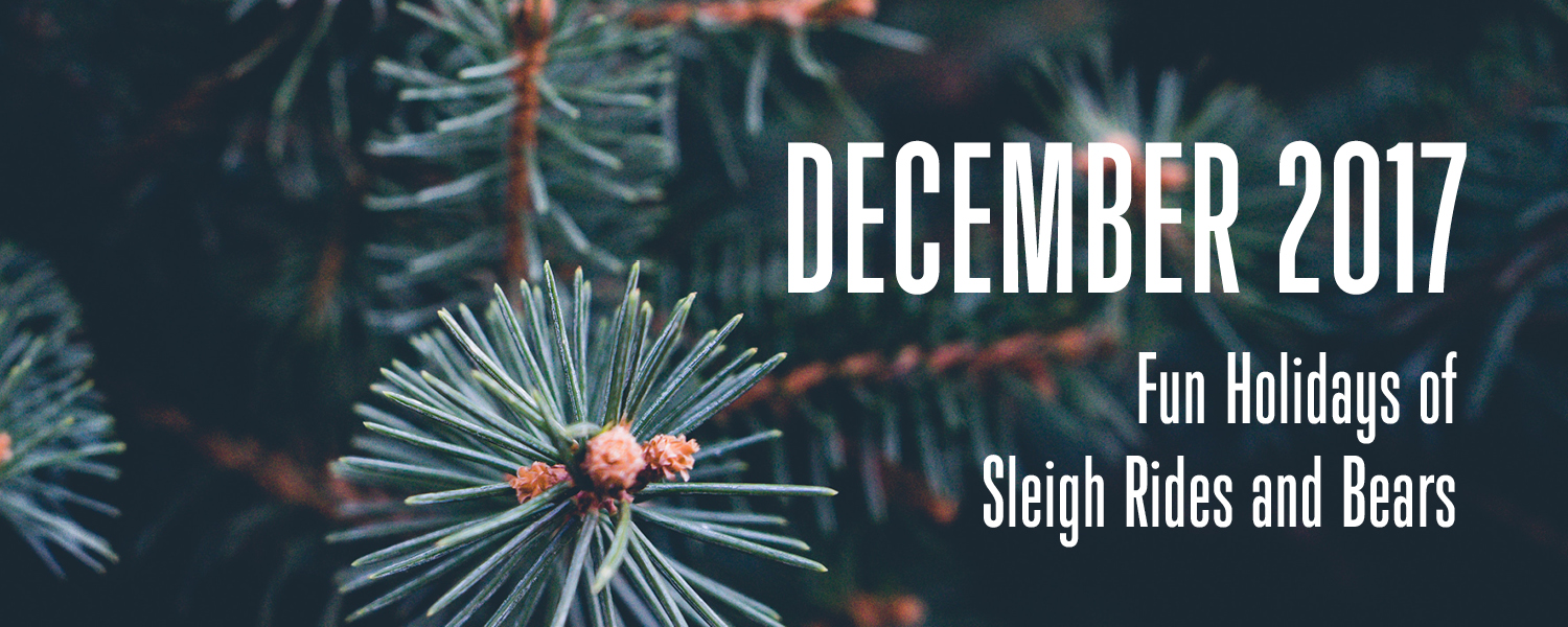 december 2017 fun holidays of sleigh rides and bears
